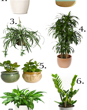 The best indoor plants