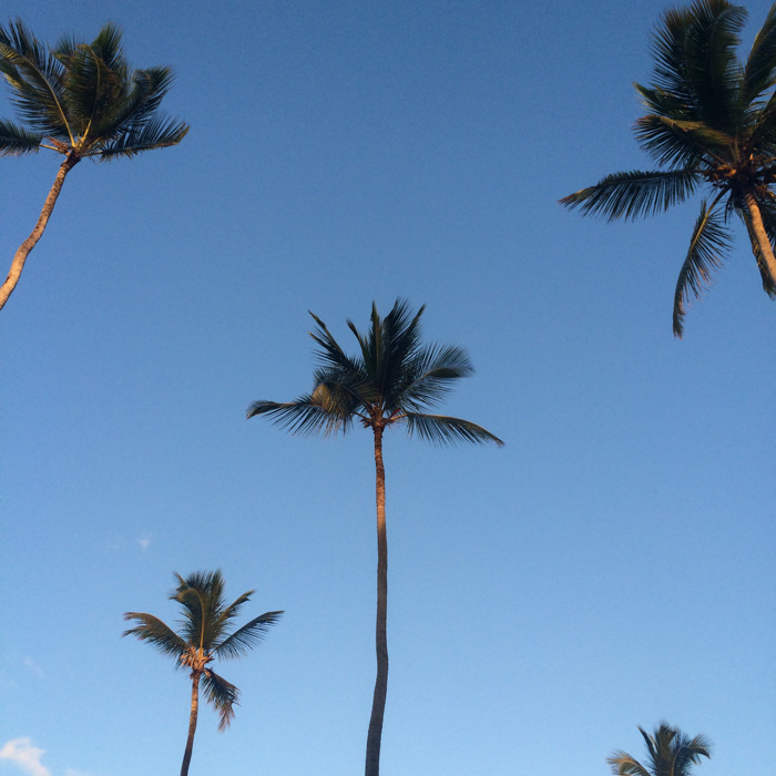 Dominican Republic Palm Trees