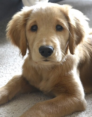 are you ready for a new puppy? six questions to ask yourself before getting a new puppy