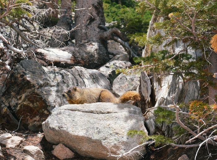 rocky mountain national park_everygoodthingblog