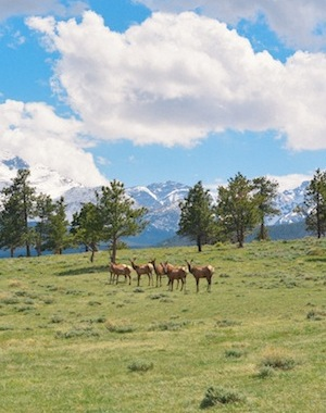 rocky-mountain-national-park-everygoodthingblog